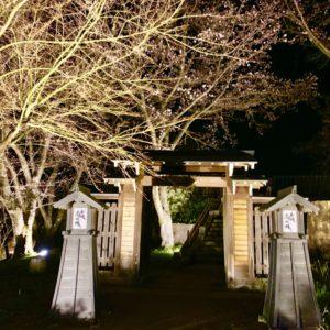 土岐市土岐津町・高山城址の桜並木ライトアップが始まりました!2019年4月5日~1週間ほど予定。18時半~21時頃まで点灯。土岐市で夜桜花見ならここ!夜景と桜が楽しめる良スポット。