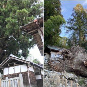 """7月11日の豪雨の影響で倒木した、岐阜県瑞浪市大湫(おおくて)町の御神木 """"樹齢1300年の大杉"""" を拝見して参りました。倒れようとも、ここはパワースポット。また来よう。"""