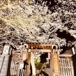 【2021年終了】土岐市土岐津町・高山城址のはなもも&桜並木ライトアップ 2021年3月27日(土)~4月4日(日)18時半~21時ライトアップ開催。土岐市で夜桜花見ならここ!夜景と桜が楽しめるスポット。