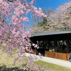 【土岐市の嵐山?】環境センター近くを流れる深沢川には素敵なネイチャースポットがあった!約3000坪の花園ゾーンでは桜をはじめ四季折々の花が咲き、川の流れ、鳥のさえずりが心地よい。